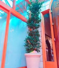 月桂樹 2017/06/17 16:28:36